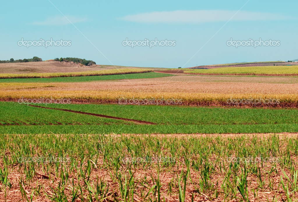 photo-sugarcane-fields.jpg