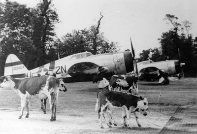 50th-fighter-group-p-47-thunderbolts.jpg